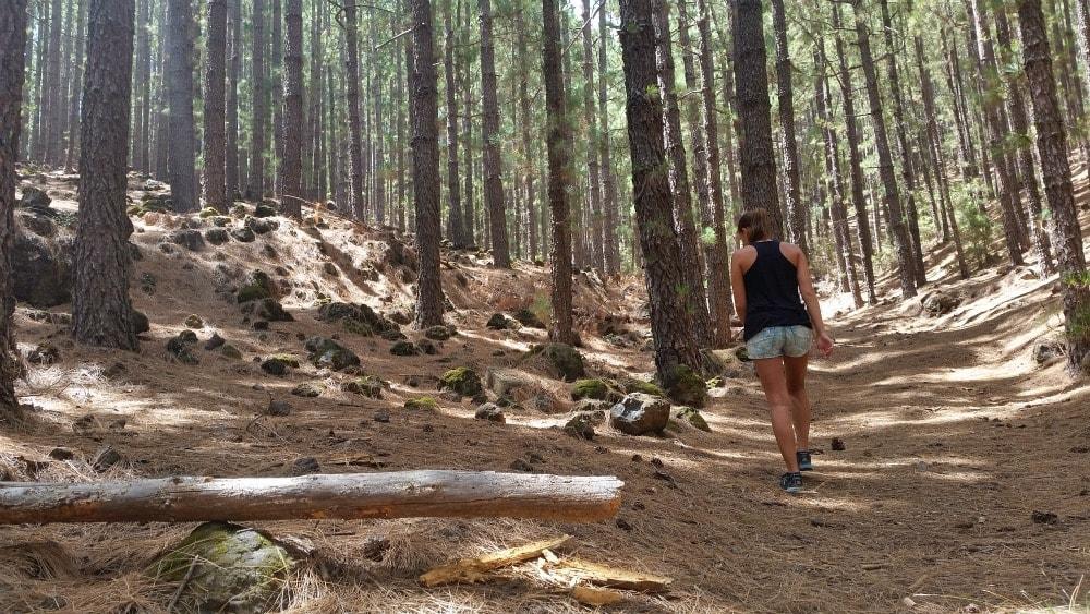 Ich im Wald Teide Teneriffa