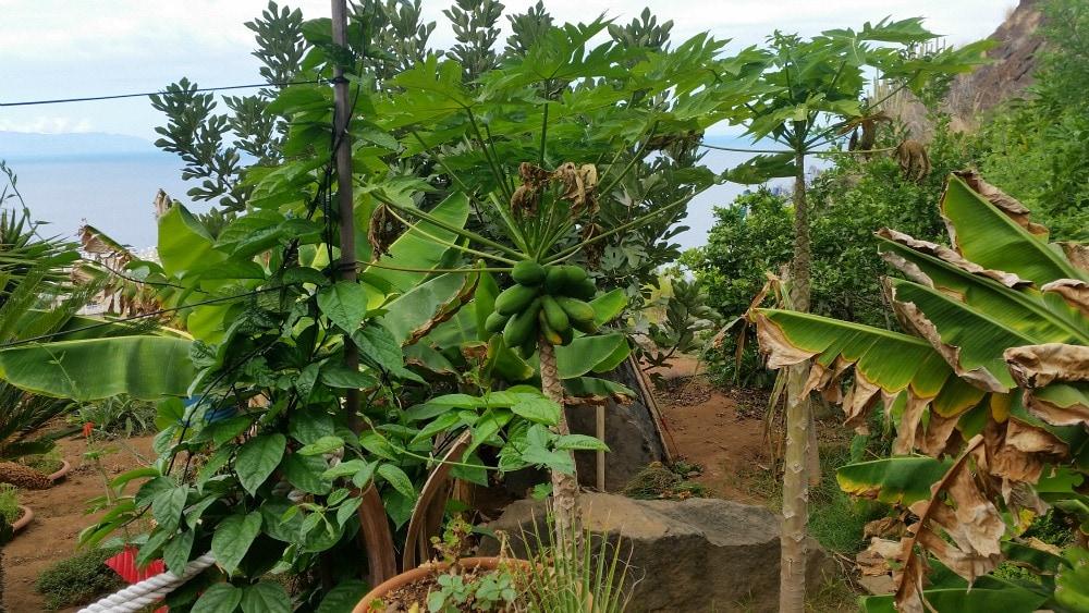Roadtrip Teneriffa Pflanzen