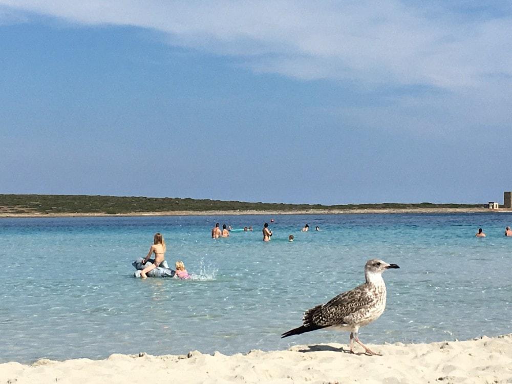 Sardinien Reisetipps - Strand Spiaggia La Pelosa