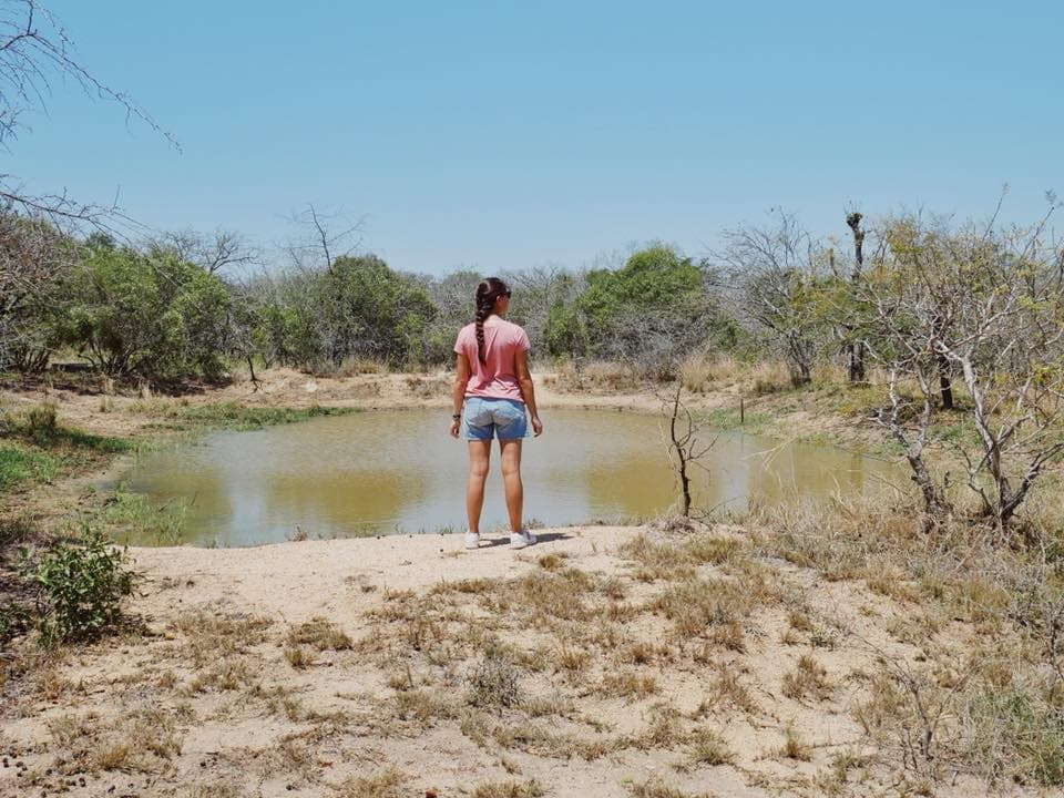Safari Krueger Nationalpark