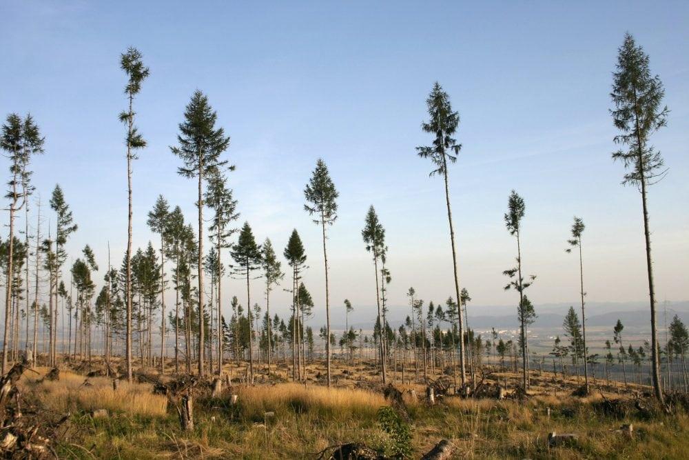 Baeume-schenken-Nachhaltige-Geschenke