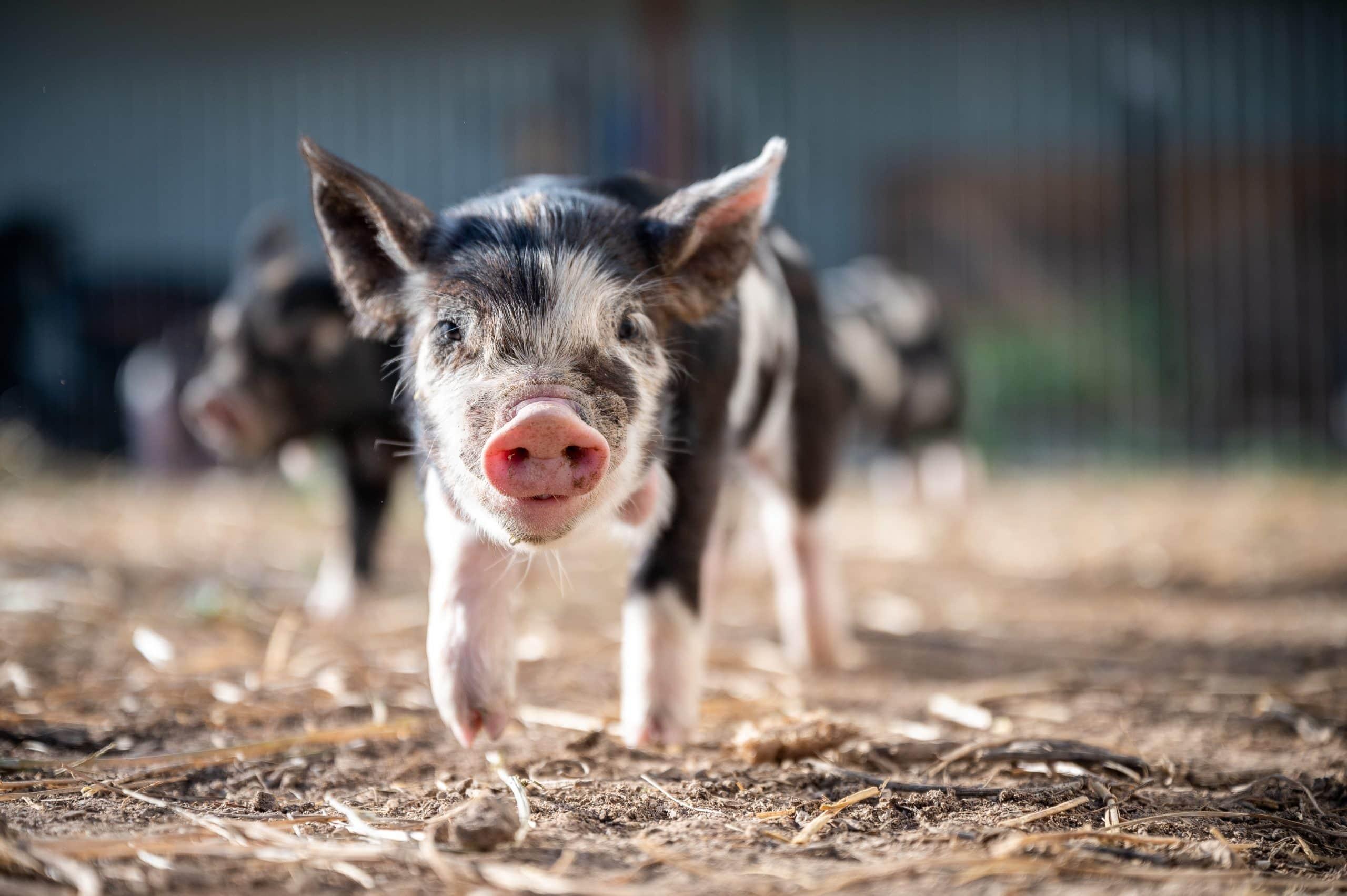 Tierpatenschaft-nachhaltige-Geschenke